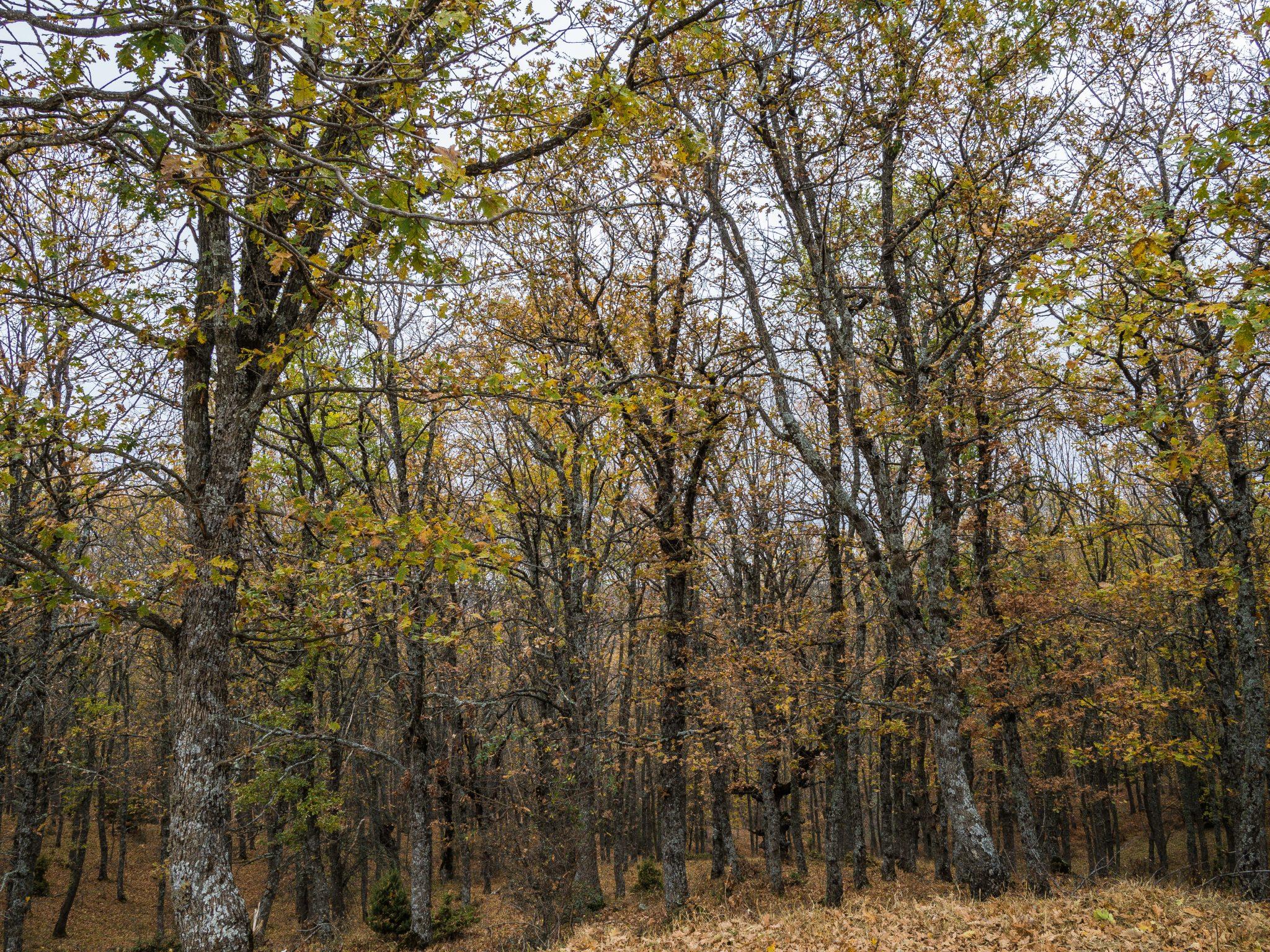 Πανεπιστημιακό δάσος Ταξιάρχη